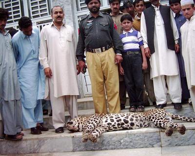 Wildlife Campaigns: Saving the Common Leopard in Pakistan
